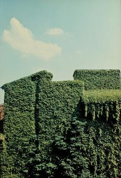 ferrara, 1981• luigi ghirri • for @Zoe James James James James Lee