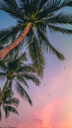 Palm Tree Wallpapers 43 Best Free Palm Tree Images For Iphone