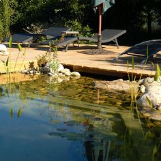 Build a natural swimming pool to create a cooling summer retreat for your homestead: discover pool zoning, natural filtration, and more. Jacuzzi, Tomato Cage Diy, Tomato Cages, Outdoor Projects, Outdoor Decor, Outdoor Ideas, Natural Swimming Pools, Mother Earth News, Garden Landscape Design
