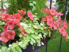 Copper petunia's and lime Licorice
