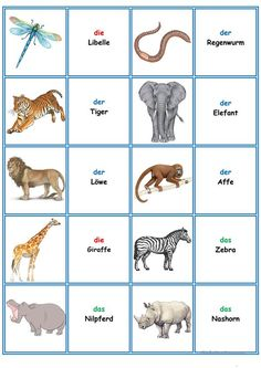 Learning German animals Games in German lessons: Memory - the T . Study German, Learn German, German Language Learning, Learn A New Language, Deutsch Language, Dutch Words, All Languages, Language Lessons, Comprehension Questions