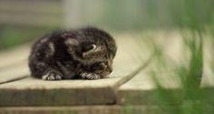 The tiniest kitten