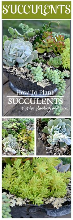 HOW TO PLANT SUCCULENTS Tips for planting succulents and making beautiful arrangements. These plants are fabulous!!!!