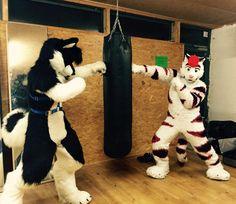 "techtiggie: ""RT @Dainty_Dragon: Everybody was Kung Fur Fighting!~ - with @Kimutiger Happy"