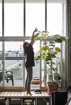 En kvinne vanner ei høy plante foran et vindu.