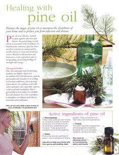 Healing with Pine oil   www.fb.com/AllAboutUMassage #abumassage #AllAboutUMassage