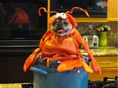 25 Dogs Dressed as Other Animals for Halloween