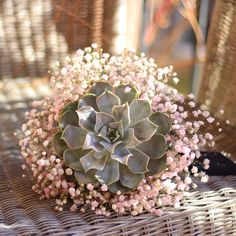 Image result for cup with baby's breath and succulent
