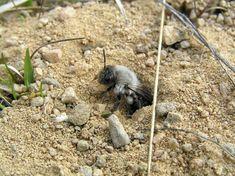Nu vaknar våra vilda bin - och vill gärna ha hjälp! | Land Creatures, Animals, Animales, Animaux, Animal, Animais
