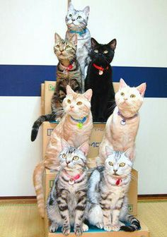 How did the photographer get these cats to sit until he got the picture?