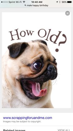 101 Funny Happy Birthday Dog Memes for Paw Lovers Everywhere Funny Happy Birthday Wishes, Happy Birthday Pictures, Happy Birthday Greetings, Male Birthday Wishes, Happy Birthday Male Friend, Birthday Blessings, Pugs, Birthday Quotes, Birthday Ideas