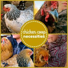 When building a chicken coop you need to keep in mind certain requirements. This list of chicken coop necessities will give you happy, healthy, hens!