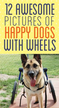 These made me so happy http://theilovedogssite.com/12-happy-dogs-with-wheels/