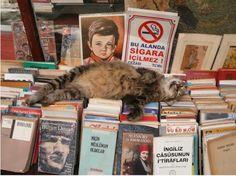 cityzen cats - Green blog ailurophile: La lecture: une addiction grave