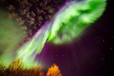 Aurora Borealis - Tromso, Norway @Brandi {Alexis June Weddings}