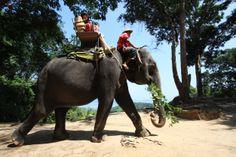 Time for trekking with us at Siam Safari Nature Tours Phuket, Thailand #siamsafari #nature #tour #phuket #thailand # travel #elephant #animal #welfare