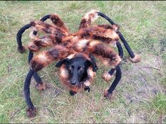 At night, the mutant spider dog prowls the streets, startling passersby and wrapping up humans in its giant web. Watch as unsuspecting people come feet-to-feet with a dog dressed as a spider and run screaming. It's adhorrible!