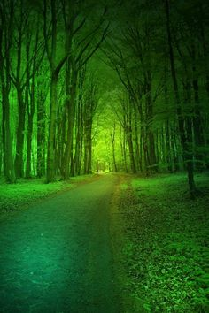 Magic Forest....elfs