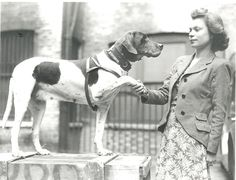 Navy dog Judy earned her Dickin Medal after suffering harsh Japanese treatment as the only official canine prisoner of war during World War II. The English Pointer also helped save the crew of gunboat HMS Grasshopper by finding water after the stricken boat was marooned on an Indonesian island in 1942.