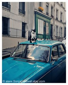 Black & White Cat on a Blue Car, Paris, Montmartre, street scene, retro, 8x10 Original Signed Fine Art Photograph.  via Etsy.