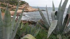 earth colors #earth earthcolors pure ibiza eivissa globalinspiration cactus #paolaC.