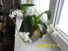 Показать картинки горшочки орхидеи в стеклянной вазе - Поиск в Google