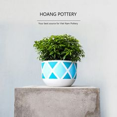 The combination of green plant and color of the new design for cute hand painted cement pots can cool down the heat of summer and bring a fresh wind to customer. 🌬️🍀🐠💙 . . . . . . #hoangpottery #vietnampottery #vietnam #vietnamese #pottery #greenplant #plant #combination #bluecolor #newdesign #new #design #cute #handpainted #handpainting #cement #cementpot #handpaintedpot #cool #fresh #heat #heatofsummer #summer #newproduct #cutepot