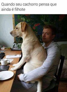#petmeupet #cachorro #gatos #amoanimais #filhote #filhode4patas #maedepet #paidepet #labrador