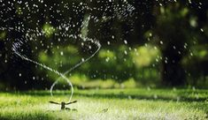 Find out the best times and schedules to water your lawn. These lawn watering tips will also help you save time and money. Learn more from Scotts.com.
