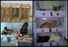 DIY Cat bunk beds