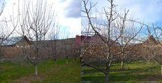 Imagini comparative cu tăieri la un gard fructifer de măr | Paradis Verde Paradis, Plants, Green, Flora, Plant, Planets