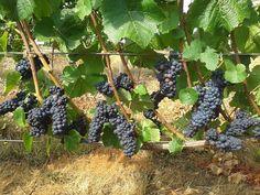Lange Estate Winery #OregonWine