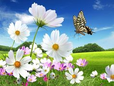 Beautiful Butterflies Pictures