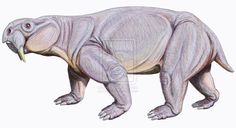 Dinodontosaurus by ~DiBgd. One of the largest dicynodont therapsids. Despite the saurus in its name, it was closer to a mammal than a reptile. It was one of the few dicynodonts to survive the Permian extinction.