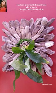 Staghorn Fern Mount Displays From Repurposed Materials | Eden Makers Blog by Shirley Bovshow