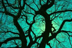 branches against the neon sky (print)