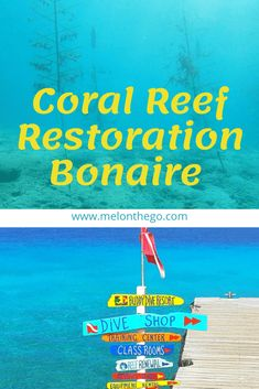 Coral Reef Renewal in Bonaire - Mel On The Go