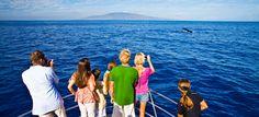 Maui Whale Watching - Tours & Cruises | GoHawaii.com