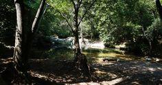 Fluss- und Hügelwanderung im Brague Tal – free-ti. Provence, Plants, River, Bathing, Travel, Flora, Plant, Planting, Provence France