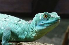 Lizard by Jessiwoo1, via Flickr