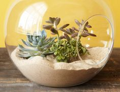 Simple Sand Scenes Coastal landscapes made miniature! Wherever they're perched, sand terrariums call to mind carefree afternoons at the beach. Tuck low-maintenance plants inside, or display treasures washed ashore. Get the full sand scene tutorial @ homemadesimple.com