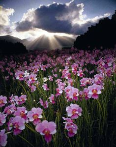 Hawaiian Orchid Farm