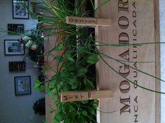 Mini herb garden for the kitchen