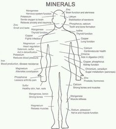 how minerals help your body.