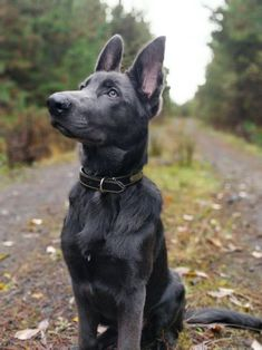 Super Dogs And Puppies Breeds German Shepherds Faces 33 Ideas Love Dogs, Cute Dogs And Puppies, Doggies, Cute Little Animals, Cute Funny Animals, Cute Dogs Breeds, Dog Breeds, German Shepherd Puppies, German Shepherds