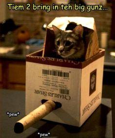 kawai #cat