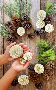 """Make beautiful """"bleached pinecones"""" in 5 minutes without bleach! Non-toxic & easy DIY craft, perfect for fall, winter, Thanksgiving & Christmas decorations! for christmas table easy diy Easiest 5 Minute 'Bleached Pinecones' {without Bleach! Easy Christmas Decorations, Pine Cone Decorations, Christmas Diy, Christmas Wreaths, Christmas Ornaments, Pinecone Christmas Crafts, Rustic Christmas, Christmas Pine Cones, Coastal Christmas"""