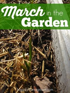 Even though its snowing today, my fingers will be in the dirt in my garden in no time!  March is an extremely busy time in the garden, and I can't wait to get out there with so much to be done.  Here's what's going on in March in the Garden.