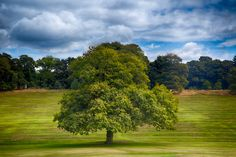 Warley Woods HRD tree Portrait, Birmingham, Woods, Golf Courses, Places To Visit, Photos, Country, Photography, Beautiful