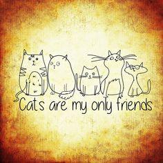 Kat, Vrienden, Grappig, Lieve, Dieren, Cute, Lol